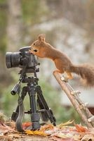 Meet Gray Squirrel--Nature Photographer at Work Journal - 150 Page Lined Notebook/Diary (Paperback) - Cs Creations Photo