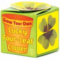 Bicyclick Grow Your Own Lucky Clover Photo