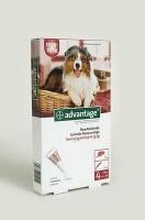 Bayer Advantage - Large Dogs Photo