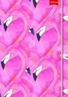 Struik Christian Media myNotes Flamingos Photo