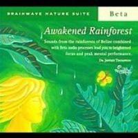 Awakened Rainforest Photo