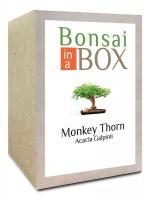 Bonsai in a box - Monkey Thorn Tree Photo