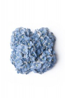 Bloom Sweetheart Blossoms - Light Blue Photo