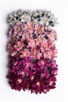 Bloom Mini Gardenia - Pink Photo