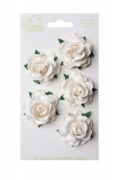 Bloom Wild Roses - Ivory Photo