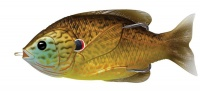 Live Target Hollow Body Sunfish Photo