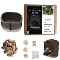 Seedleme Bonsai pot kit gift box. Indigenous South African tree seeds Euclea Crispa Photo
