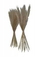 Natural Dry Pampas Flower Sticks 100cm Beigh Photo