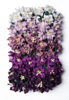 Bloom Mini Gardenia - Purple Photo