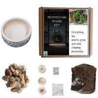 Seedleme Bonsai grow kit gift box. Indigenous South African tree seeds Euclea Crispa Photo