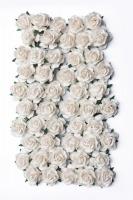 Bloom Large Wild Roses - Ivory Photo