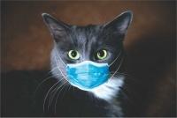 Graffiti Laptop Skin Cat with Mask Photo