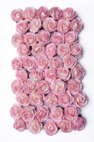 Bloom Chelsea Roses - Baby Pink and Ivory Photo
