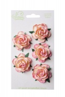 Bloom Wild Roses - Champagne Pink Photo