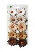 Bloom Chrysanthemums - Earth Tones Photo