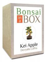 Apple Bonsai in a Box - Kei Photo