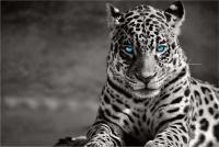 Graffiti Laptop Skin Leopard Photo