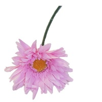 Seedleme Gerberas stems Pink Artificial Faux Silk Plants by Photo