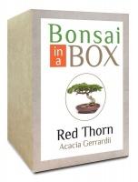 Bonsai in a Box - Red Thorn Photo
