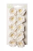 Bloom Magnolias - White Photo
