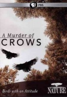 Nature: Murder Of Crows Photo