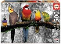 Birds in the Jungle Photo