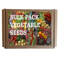Seedleme Beetroot Cabbage Carrot Leek Spinach Butternut Seeds Photo