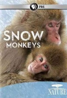 Nature: Snow Monkeys Photo