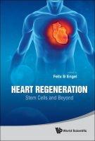 heart regeneration Felix B Engel