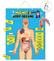 my kids magnet body organs puzzle magnetic board vehicle