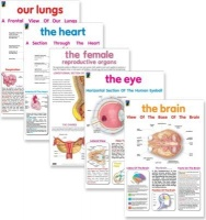 educat wall chart 5 pack organs of the body school supply