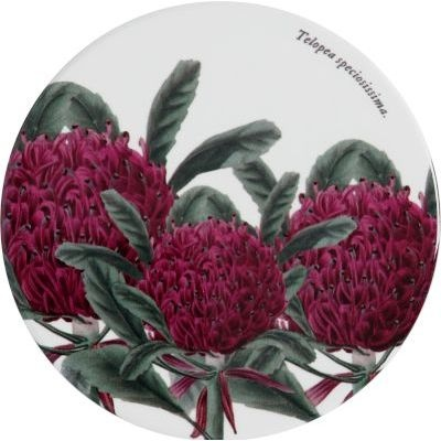 Maxwell and Williams Botanic Garden Round Coasters Telopia