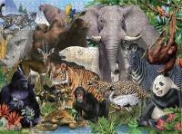 1000 Piece Jigsaw PuzzleEducational Toy Animal Kingdom