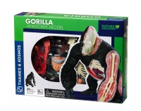 Nature Discovery Animal Anatomy Gorilla